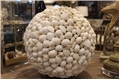WHITE MIXED SHELL ORB - X LARGE