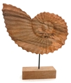 Nautilus Shell with Black Base - Natural